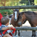 Parco Naturale di Cervia: animali, natura e...ritrovarsi bambini