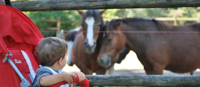 Parco Naturale di Cervia: animali, natura e…ritrovarsi bambini