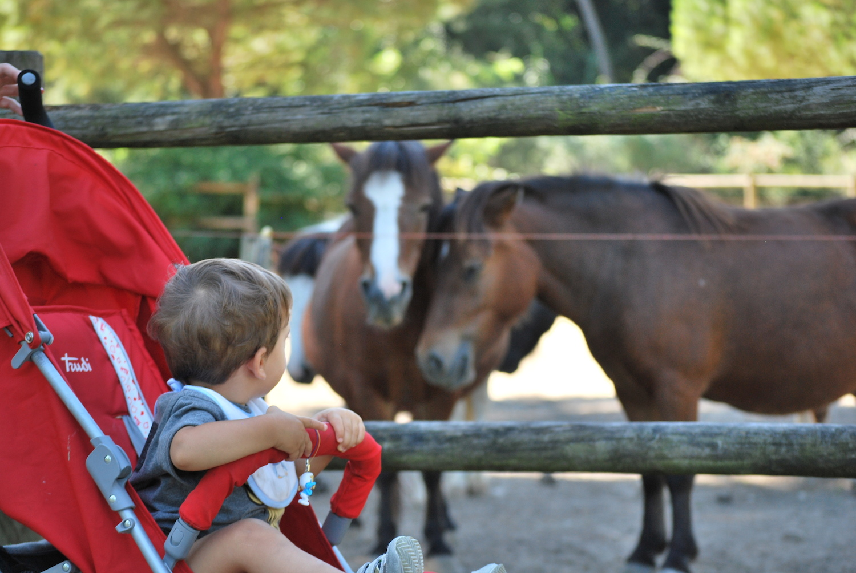 Parco Naturale di Cervia - Peekaboo Travel Baby