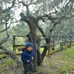 Frantoi Aperti con bambini: nel mondo inverosimile delle meraviglie umbre