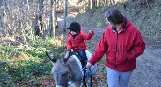 Asini e bambini: i vostri bimbi ce l'hanno la patente di guida asinina?
