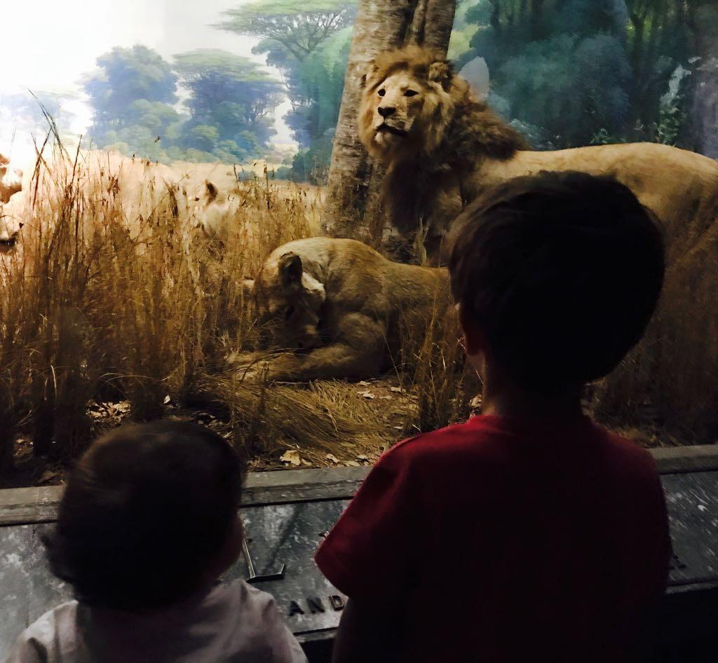 New york con bambini piccoli - Museo di storia naturale